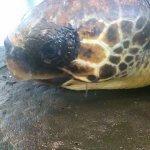 tartaruga Scario2