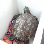 tartaruga Scario3