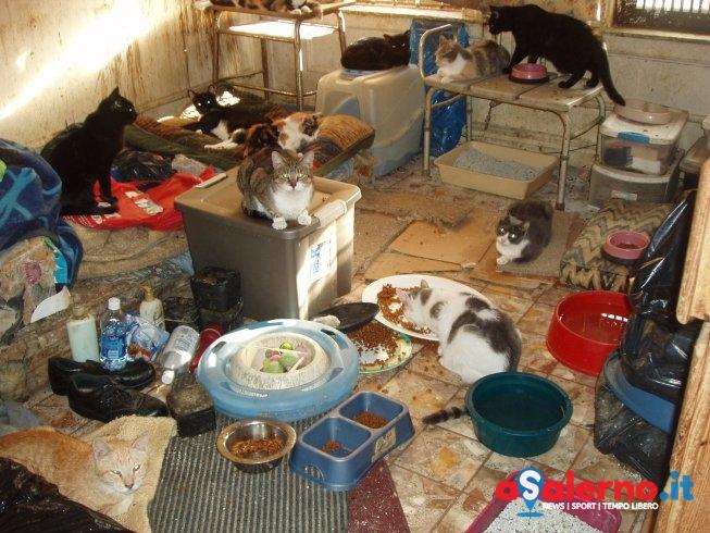 """""""A Salerno persone affette da Animal Hoarding"""", che vengano monitorati sul territorio"""" - aSalerno.it"""
