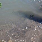 degrado fiume sele7