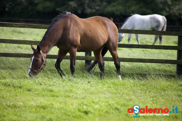 Colpita al volto da un cavallo a Montena di Giovi, 52enne in rianimazione al Ruggi - aSalerno.it