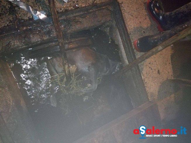 """Orrore a Sarno, carcassa di cane scaricata nel canale di scolo. Il sindaco: """"Disumano"""" - aSalerno.it"""