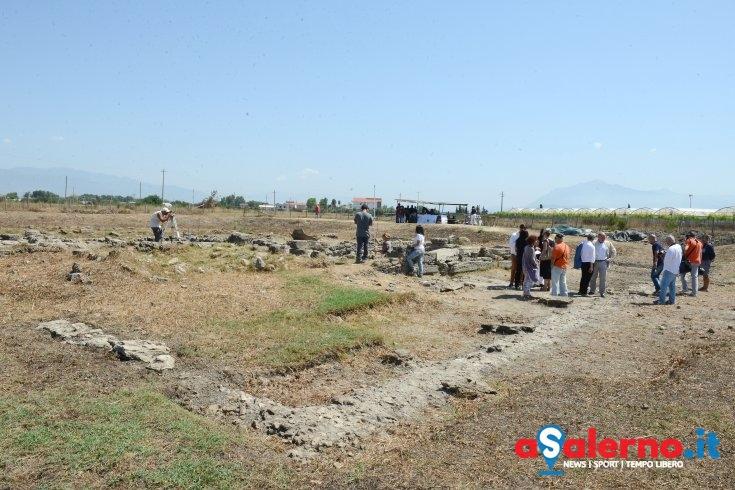 Olive e molitura nell'area archeologica di Paestum: olio donato al parco - aSalerno.it