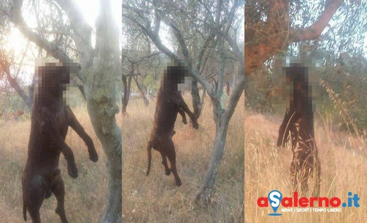 Un cane è stato trovato impiccato a Montecorvino Rovella - aSalerno.it