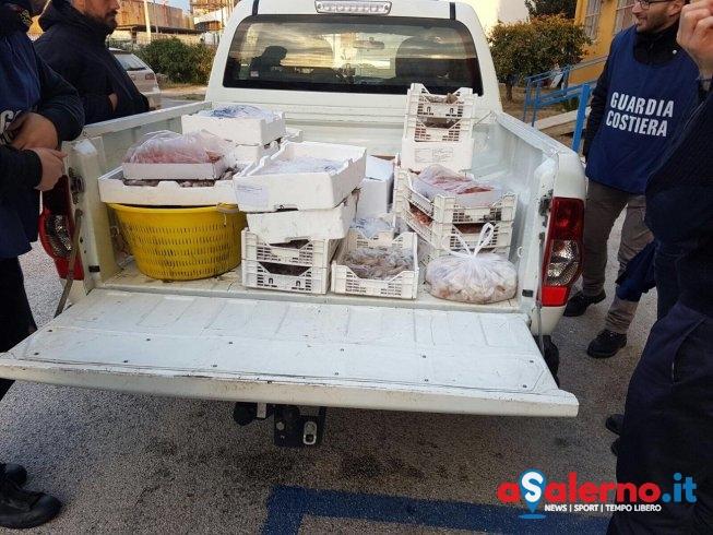 Blitz e controlli della Guardia Costiera: scoperta vendita di triglie sottomisura – LE FOTO - aSalerno.it