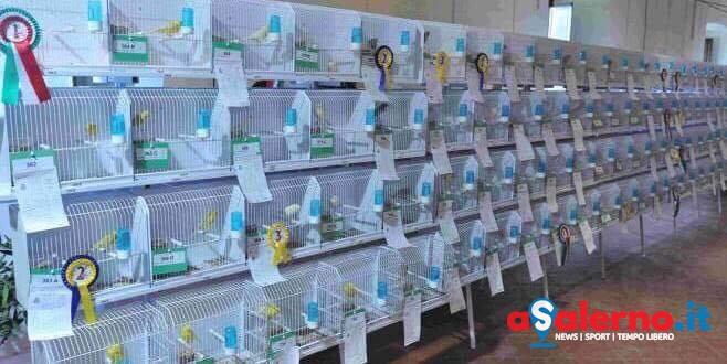 Tutto pronto per la Terza Mostra Ornitologica, in arrivo allevatori internazionali - aSalerno.it