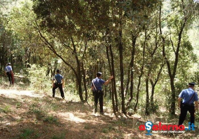 Furto di castagne in un fondo agricolo a Petina, denunciati due uomini - aSalerno.it