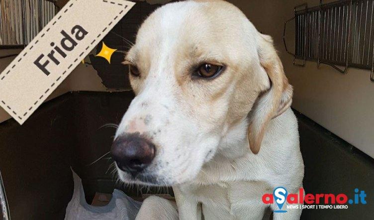 Un carrellino per Frida, l'appello per salvare la piccola cagnolina di Auletta - aSalerno.it