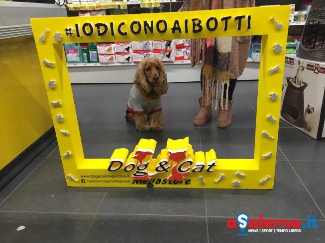 """""""Io Dico No ai Botti"""": ritorna la campagna del megastore Dog&Cat – FOTO - aSalerno.it"""