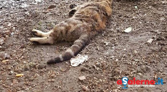 """Centro storico, gatti avvelenati nel quartiere: """"E' il terzo questa settimana"""" - aSalerno.it"""