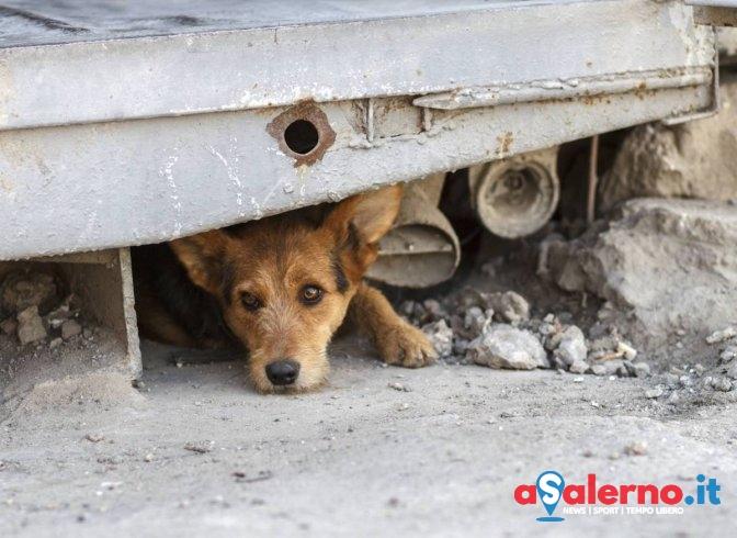 Camerota: il Comune lotta contro l'abbandono dei cani - aSalerno.it