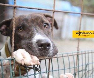 cani adozioni cane