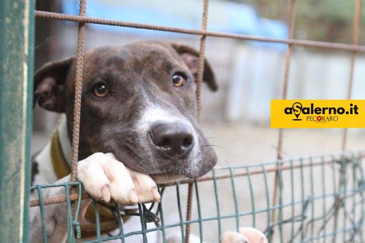 Eboli, giovane ferito al labbro da un cane randagio - aSalerno.it