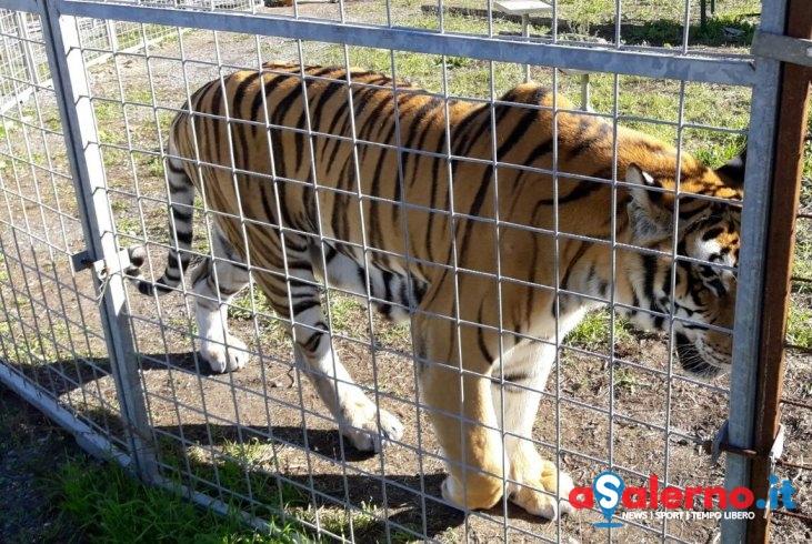 """Circo Orfei a Cava, gli attivisti di Veg in Campania: """"Giustizia e libertà per gli animali"""" - aSalerno.it"""
