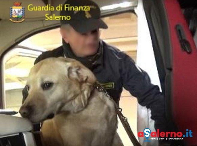 Blitz di Zebon, Esco e Fabry: cani della finanza a caccia di dosi dal lungomare e alla stazione - aSalerno.it