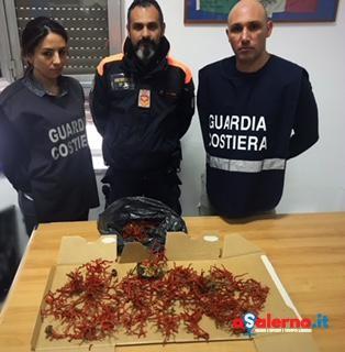 L'oro rosso della Divina sequestrato dalla Guardia Costiera di Salerno – FOTO - aSalerno.it