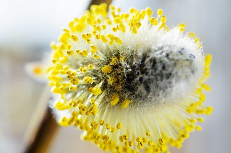 Domani la XII Giornata Nazionale del Polline - aSalerno.it