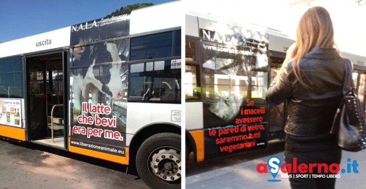 Veg in Campania, campagna di sensibilizzazione animalista viaggia sui bus - aSalerno.it