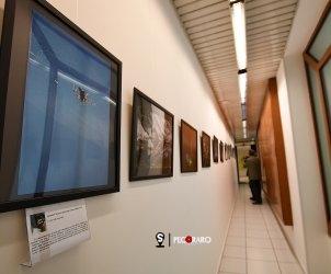 Salerno Ordine dei Medici. Inaugurazione mostra d'arte