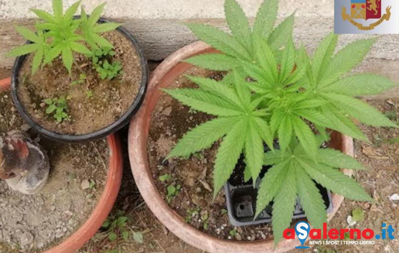 marijuanapiantine