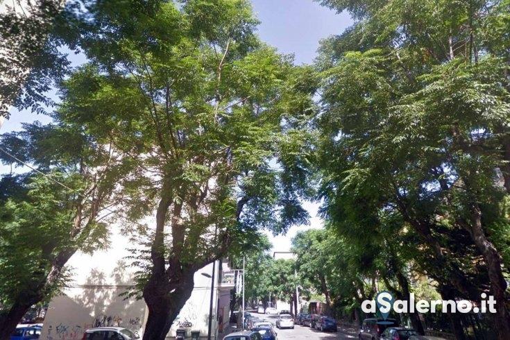 Rischio cedimento: 8 alberi saranno abbattuti in via Luca Gaurico - aSalerno.it