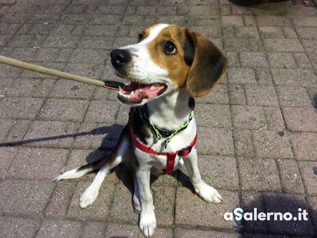 Santa Teresa, trovato cane abbandonato: l'appello – FOTO - aSalerno.it