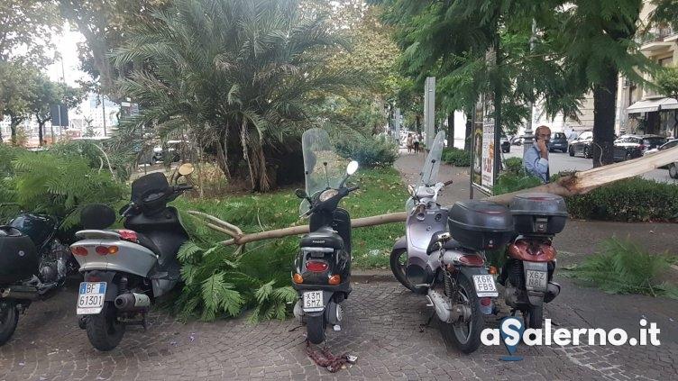 Salerno, albero si spezza e si abbatte sui motorini - aSalerno.it