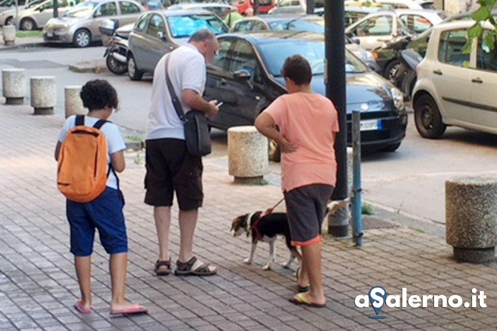 adozione cane 2