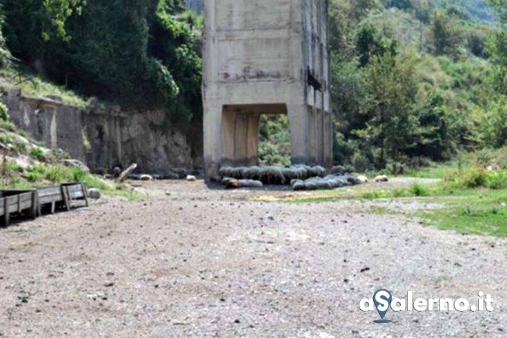 Nocera, pascolo libero in zona protetta: denunciato pregiudicato – FOTO - aSalerno.it