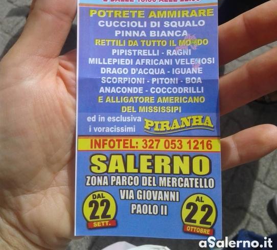 Mostra itinerante di animali a Salerno, scatta la protesta degli attivisti - aSalerno.it