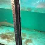 06 - foto squalo pinna bianca