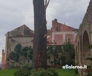 ravello -pino danneggiato da fulmine