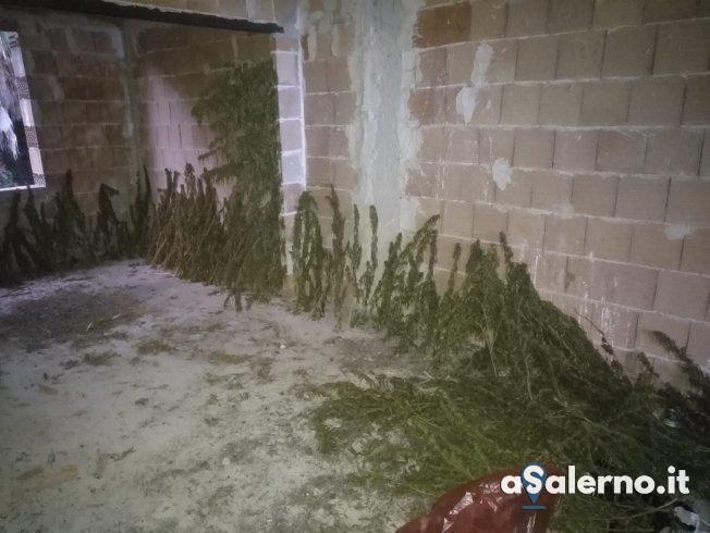 Eboli, scoperta una casa in costruzione con trenta chili di foglie di marijuana - aSalerno.it
