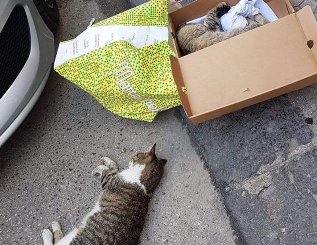 Killer dei gatti a Battipaglia, li avvelena e scappa - aSalerno.it