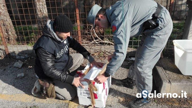 Prodotti ittici e panettoni artigianali: sequestrati più di 4 quintali - aSalerno.it