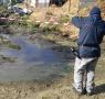 Buccino - effluenti di allevamento