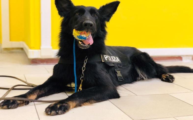 polizia salerno cane
