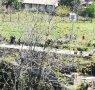 La zona dove è stato trovato il cadavere. Nel rione Regina Pacis a Mercato San Severino.