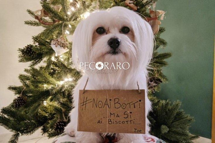 No ai botti di Capodanno, grande successo per la campagna lanciata da Dog&Cat - aSalerno.it