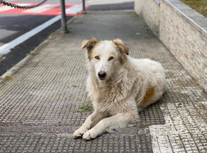 Sassano, continua l'assistenza ai cani randagi - aSalerno.it