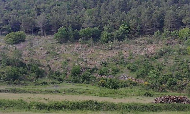 Ferite nel bosco, Carabinieri scoprono il taglio abusivo - aSalerno.it