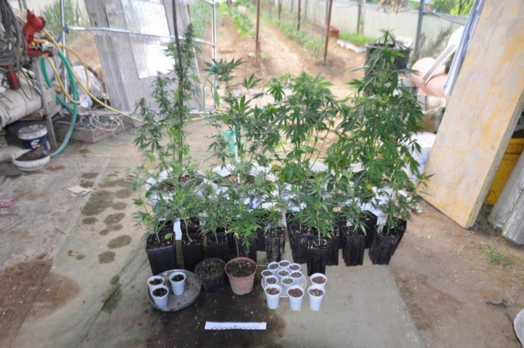 marijuana 3