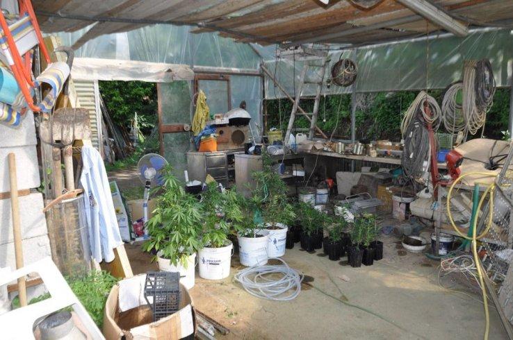 Cava, un garage da narcotraffico: coltivava marijuana – LE FOTO - aSalerno.it
