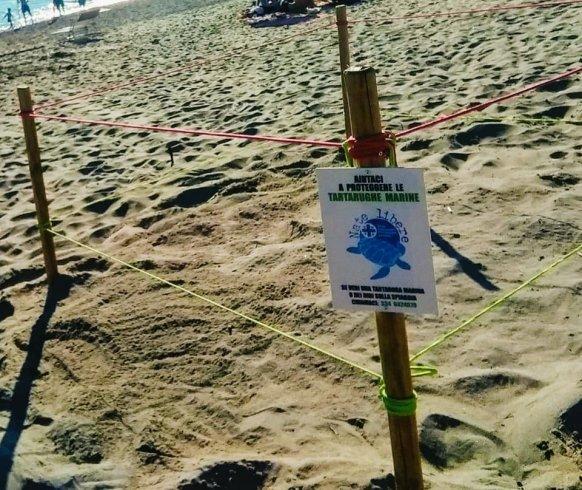 Cilento, monitoraggi sulle spiagge sulle tracce delle Caretta caretta - aSalerno.it