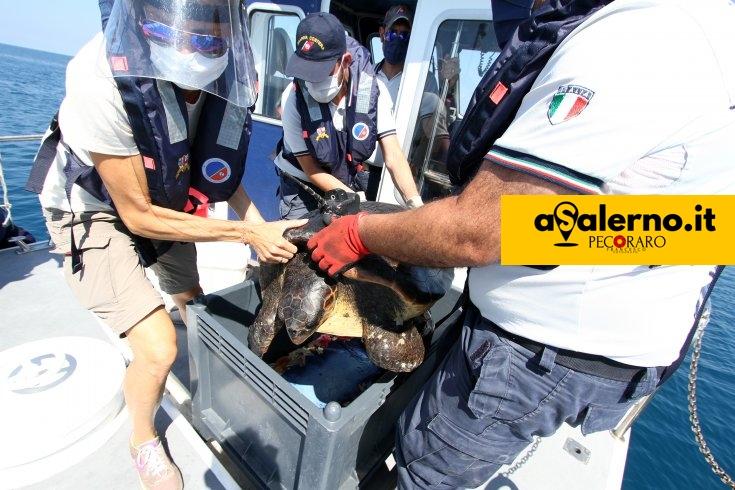 Salvata e liberata in mare una tartaruga a largo del litorale di Pontecagnano - aSalerno.it