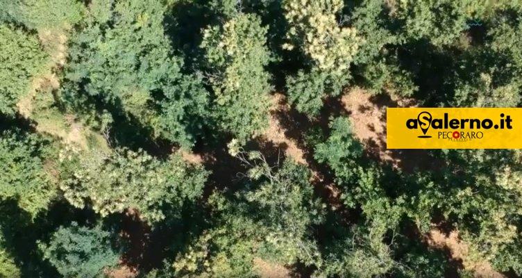 """""""Abbraccia il tuo albero"""", l'iniziativa di adozione delle piante nel Salernitano - aSalerno.it"""