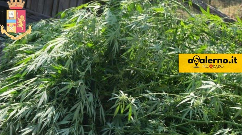 marijuana polizia