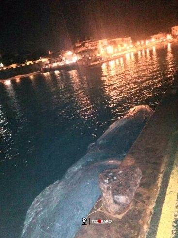 Carcassa di balena trasportata dal mare nel porto di San Marco di Castellabate - aSalerno.it