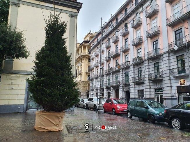 In via Velia il primo dei 12 alberi posizionati dal Comune di Salerno - aSalerno.it