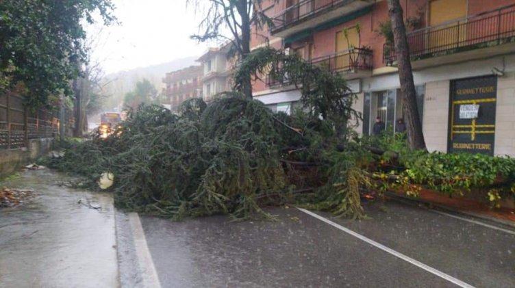 Cade albero sulla statale, strada bloccata al confine con Pellezzano - aSalerno.it